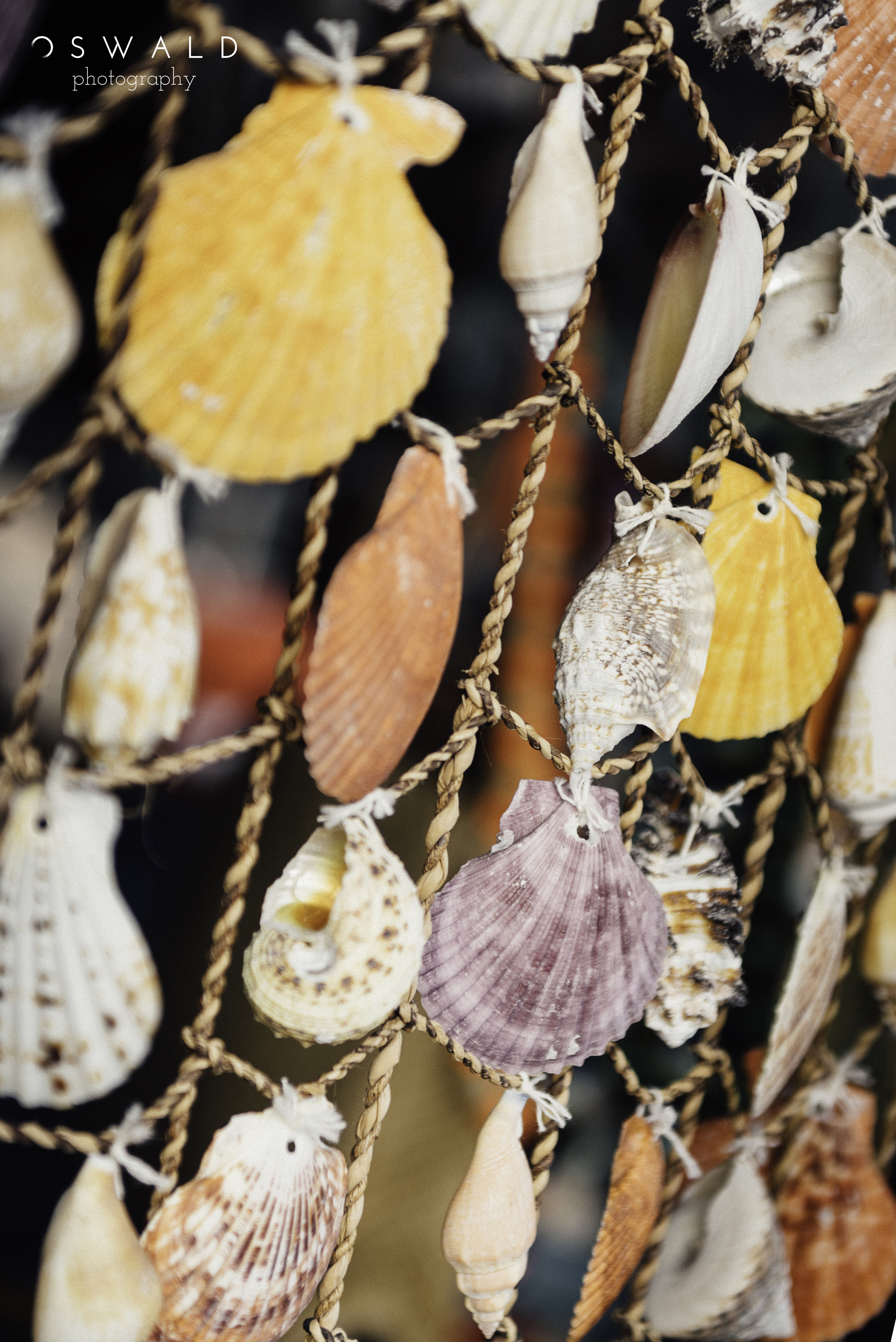 A curtain of vividly colored seashells gathered on Hawaiian beaches dangles from string, giving particular focus to a purple oyster shell.