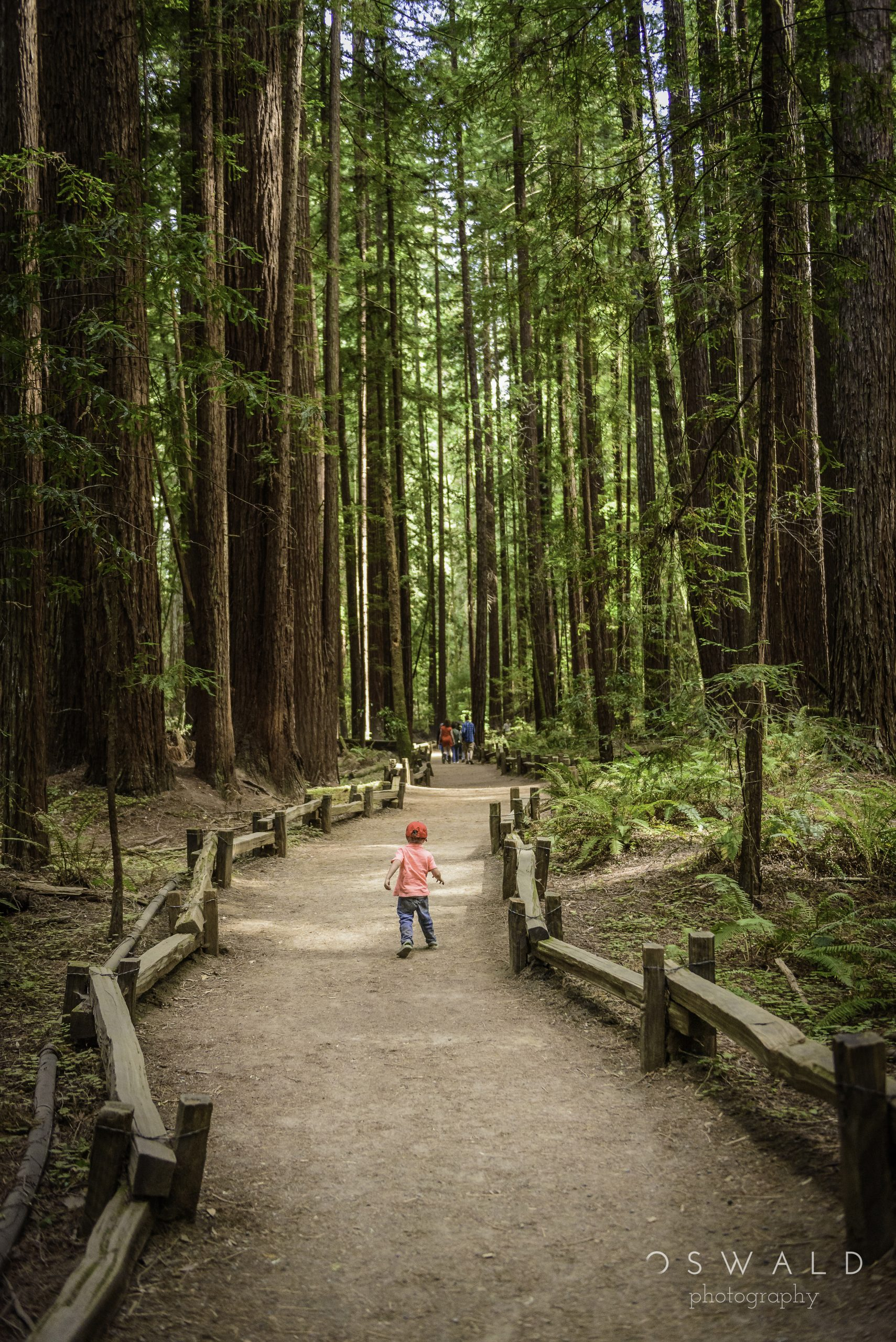 A photograph of a young boy walking through a redwood forest, far behind a group of adults that have passed on ahead.