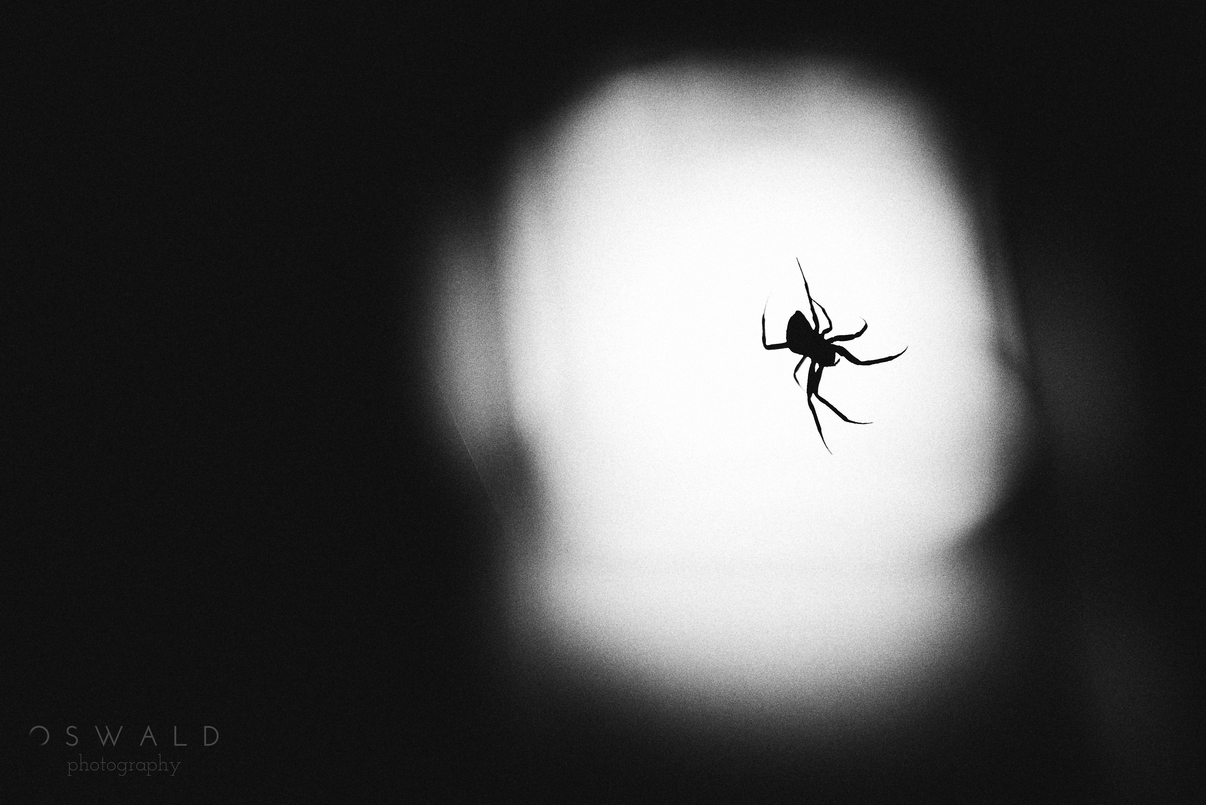 A creepy monochrome photo of a spider spinning its invisible web at night, backlit by a sconce.