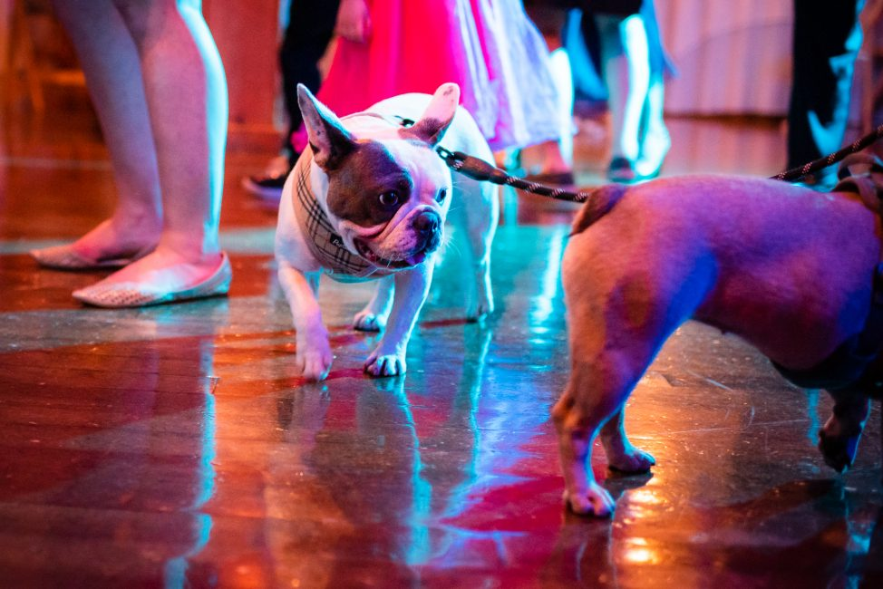 Frenchies on the dance floor during a Forest House Lodge Wedding
