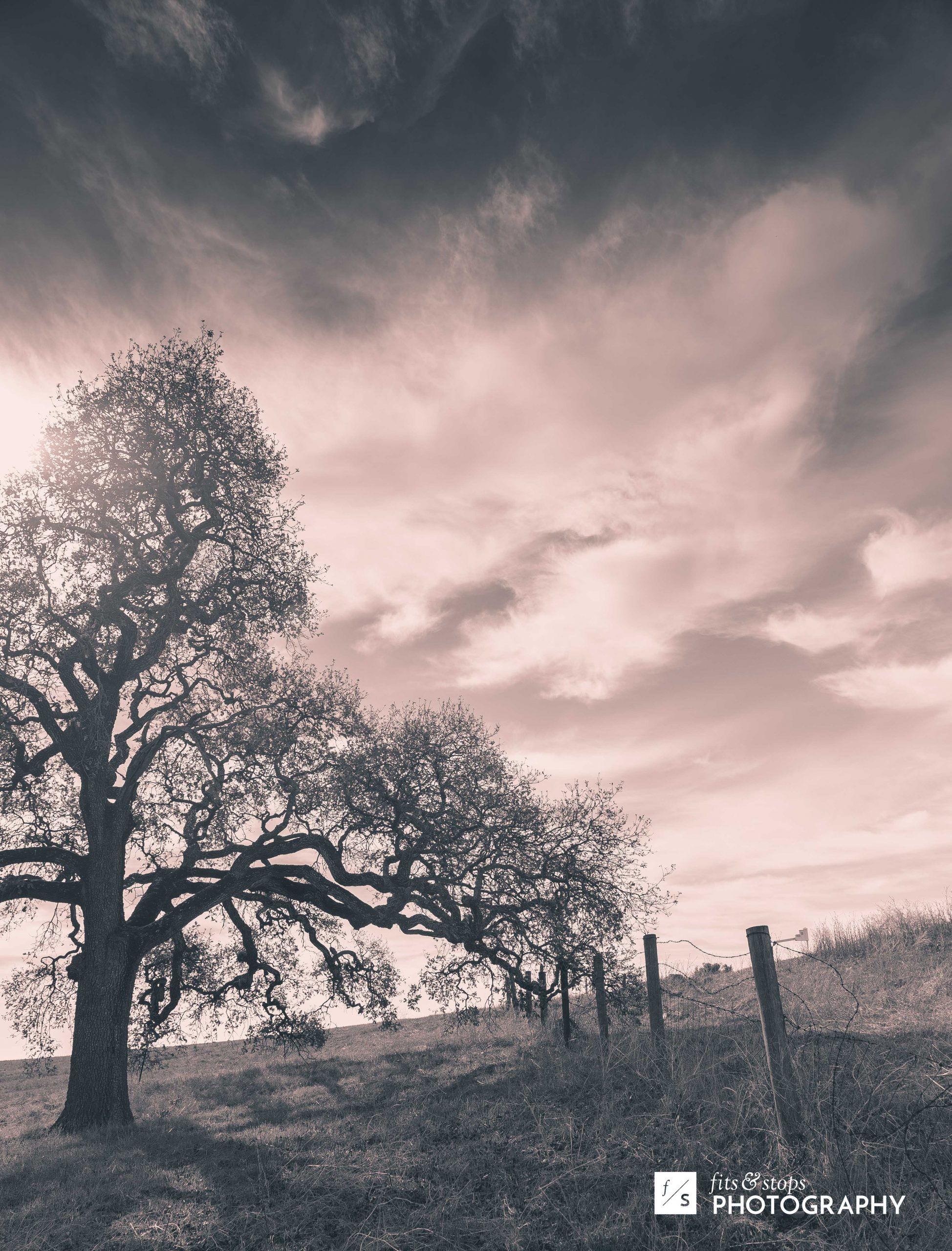 An aged Oak tree sits bare of leaves in the low winter sun, with branches that have begun to lean low to the ground with age. Taken near Napa, California.