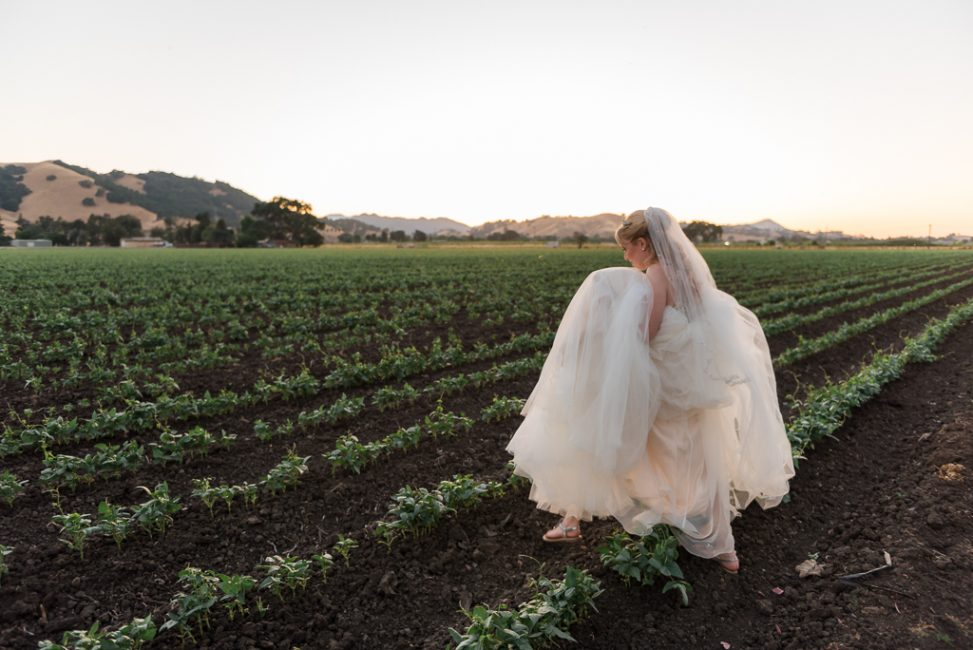 A bride lifts her dress in order to walk along the rows of some northern California farmland.