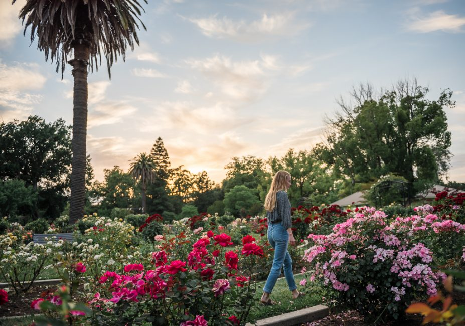 A young woman walks amongst the roses in a downtown Sacramento flower garden.
